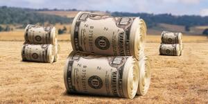 bale-novaca