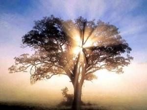 vjera-raste-kao-stablo
